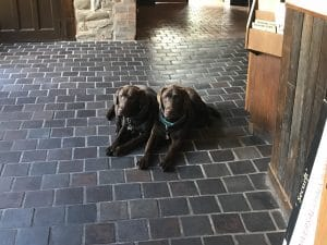 Our Lovely Dogs